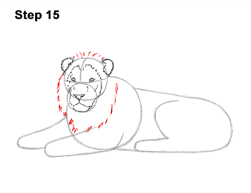 How to Draw a Lion Color Side Laying Lying Down 15
