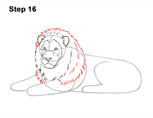 How to Draw a Lion Color Side Laying Lying Down 16