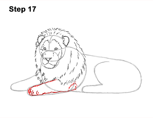 How to Draw a Lion Color Side Laying Lying Down 17