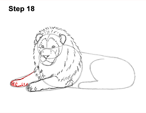 How to Draw a Lion Color Side Laying Lying Down 18