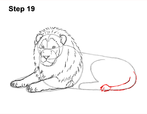 How to Draw a Lion Color Side Laying Lying Down 19