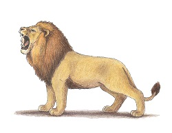 How to Draw a Lion Roaring Color