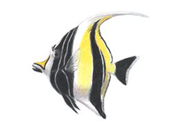 How to Draw a Moorish Idol Fish Fish