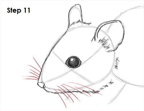 Draw Mouse 11
