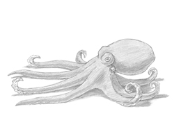 How to Draw an Octopus Tentacles