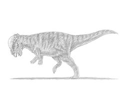 How to Draw a Pachycephalosaurus Dinosaur