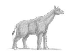 How to Draw a Paraceratherium Indricotherium