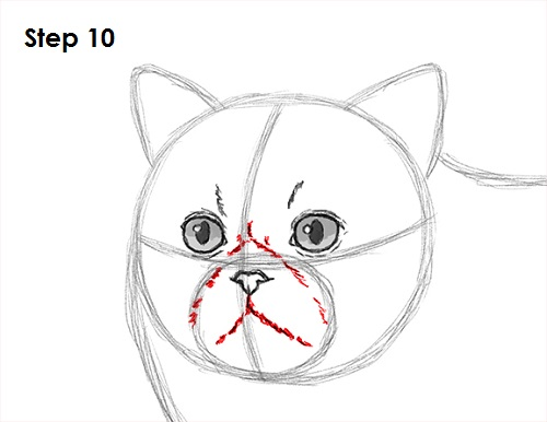 Draw Persian Cat 10