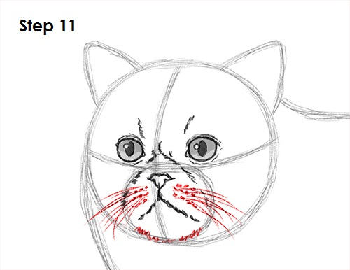 Draw Persian Cat 11