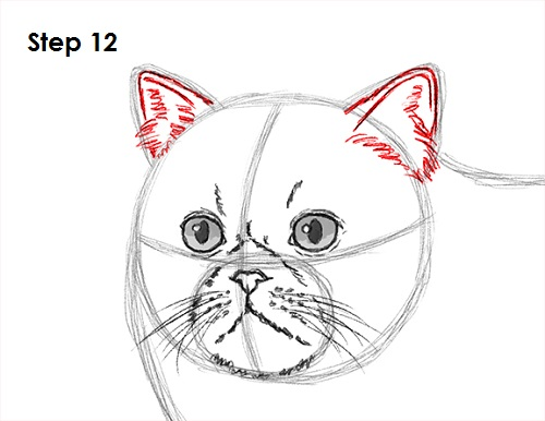 Draw Persian Cat 12