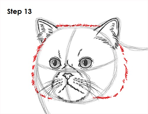 Draw Persian Cat 13