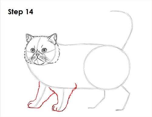 Draw Persian Cat 14