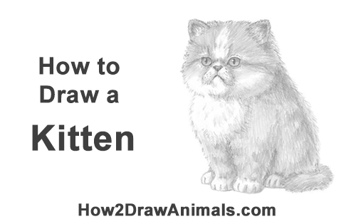 How to Draw a Persian Kitty Cat