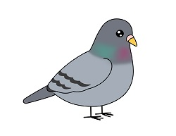How to Draw a Cute Cartoon Pigeon Bird