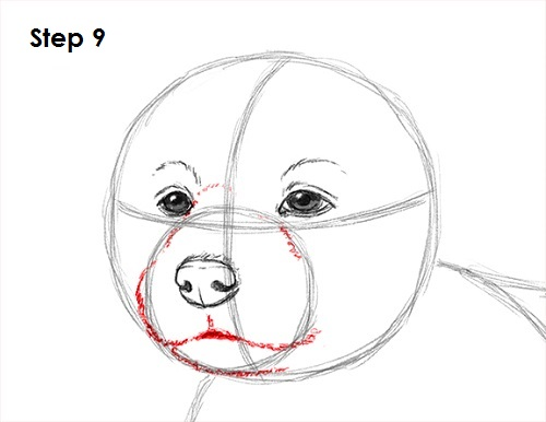 Draw Puppy Dog 9