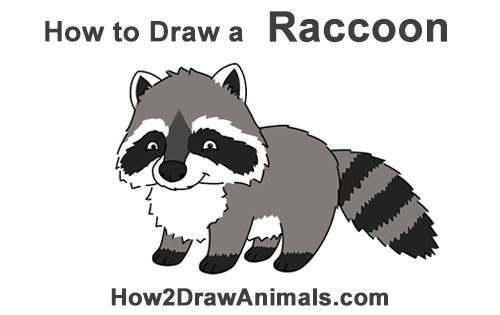 How to Draw Cute Cartoon Raccoon