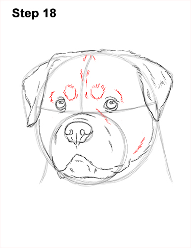 How to Draw a Rottweiler Dog Head Portrait Face 18