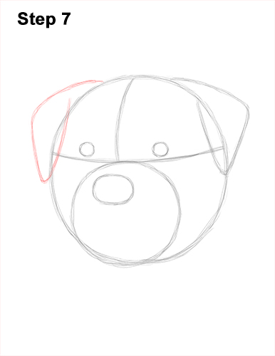 How to Draw a Rottweiler Dog Head Portrait Face 7