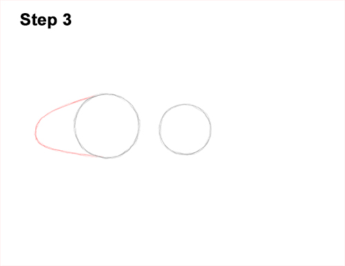 How to Draw a Royal Gramma Fairy Basslet Fish 3