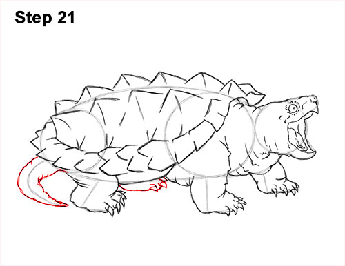 How to Draw Alligator Snapping Turtle Snapper 21