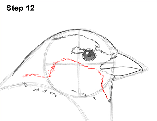 Draw House Sparrow Bird 12