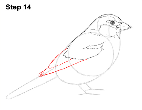 Draw House Sparrow Bird 14