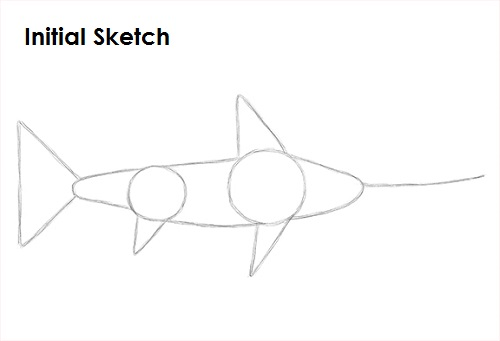 Draw Swordfish Sketch