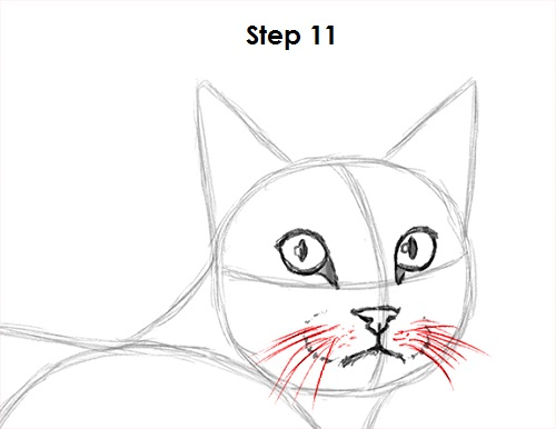 Draw Tabby Cat 11