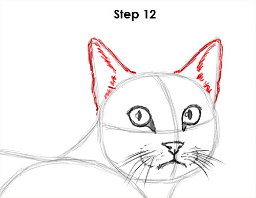 Draw Tabby Cat 12