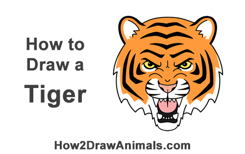 How to Draw Angry Roaring Cartoon Tiger Head