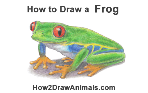 How to Draw a Red-eyed Tree Frog