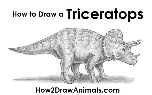 Draw Triceratops