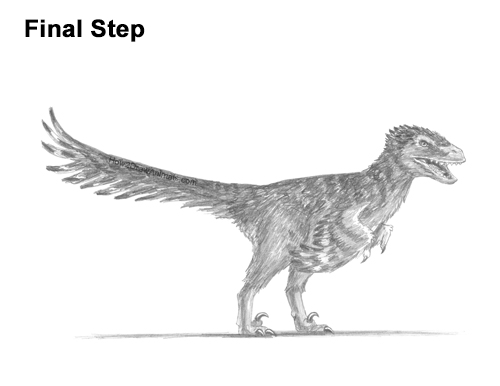 How to Draw a Velociraptor with Feathers VIDEO & Step-by ...
