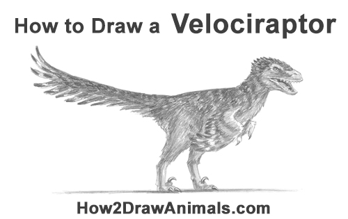 How to Draw Accurate Feathered Velociraptor