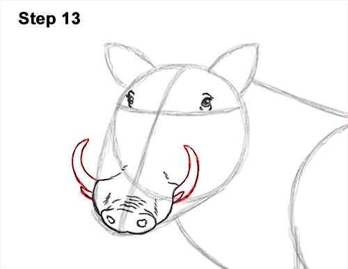 How to Draw a Common Warthog Pig 13