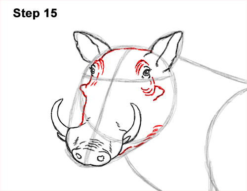 How to Draw a Common Warthog Pig 15
