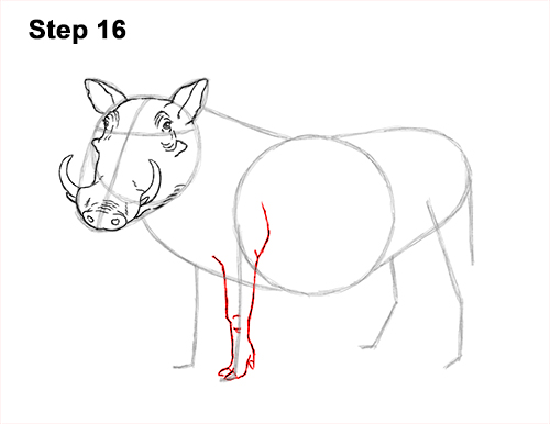 How to Draw a Common Warthog Pig 16