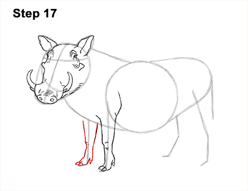 How to Draw a Common Warthog Pig 17
