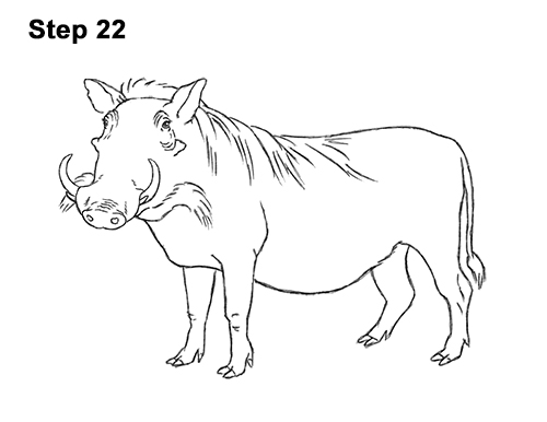 How to Draw a Common Warthog Pig 22