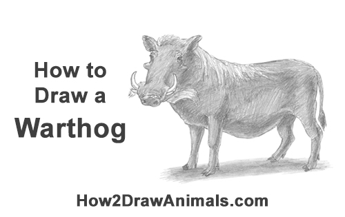 How to Draw a Common Warthog Pig