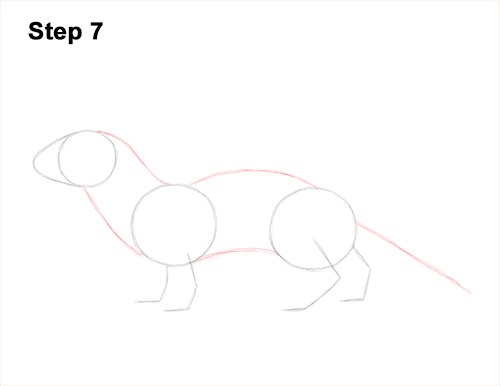 How to Draw a Common Least Weasel 7