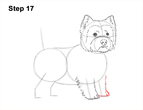 How to Draw a West Highland White Terrier Puppy Dog 17