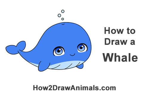 How to Draw Cute Chibi Cartoon Blue Whale