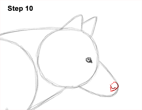 How to Draw a Grey Timber Wolf Running Hunting 10
